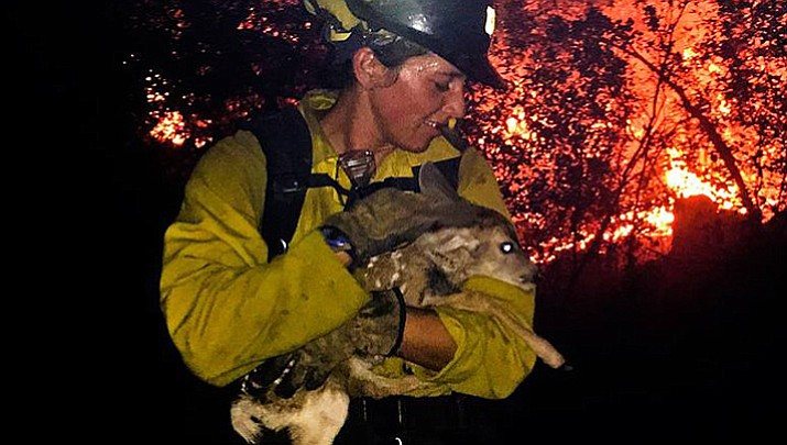 A Flagstaff Hotshot carries a fawn – one of two the wildland firefighters found Friday night – to safety and to be reunited with its mother.