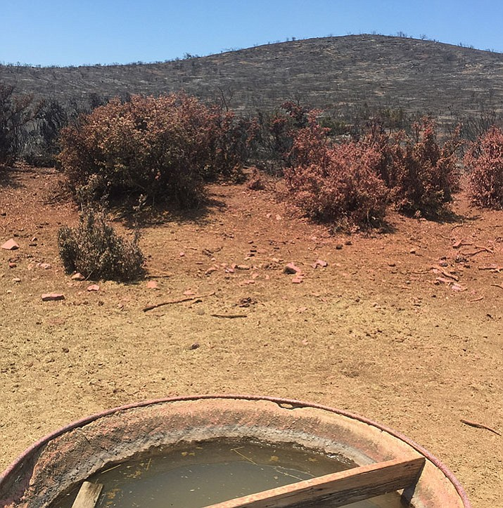 The Goodwin Fire scorched pasture in Mayer, and red slurry remains on vegetation. (Karzack Ranch/Courtesy)