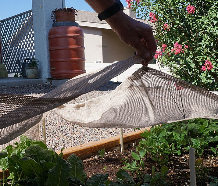 Prescott resident Fred Oswald typically waters his raised vegetable garden and desert landscaping with rainwater captured in barrels. (Cindy Barks/Courier)