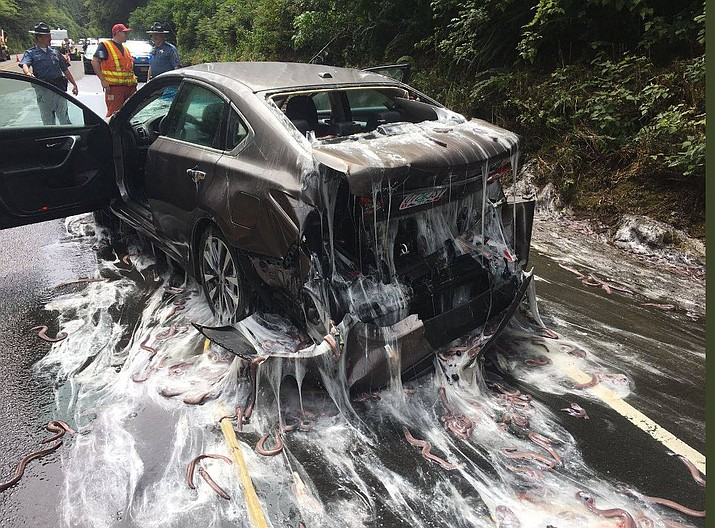 A truck hauling 7,500 pounds of eels overturned on Highway 101 in Depoe Bay, Ore., Thursday, July 13, 2017. When hagfish (commonly known as slime eels) become stressed, they secrete a slim. (Depoe Bay Fire District)