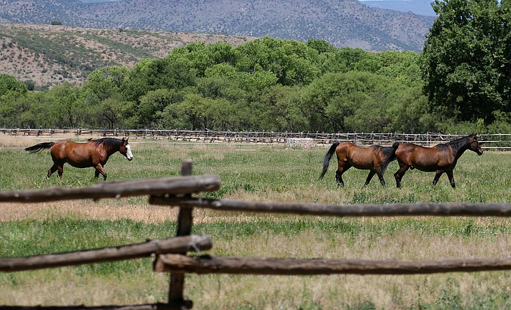 At any given time, between 60 and 100 horses are at the Rockin' River Ranch. On July 17, Arizona State Parks and Trails will conduct the second of three public open houses to discuss the master plan for Rockin' River Ranch State Park, which is situated on a 209-acre horse ranch on the Verde River south of Camp Verde off Salt Mine Road. (Photo by Bill Helm)