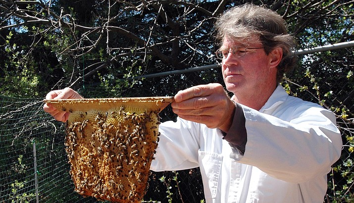 Patrick Pynes is president of the Northern Arizona Organic Beekeepers Association in Flagstaff. In this photo taken a few years ago, Pynes works with a colony of honeybees (living in the Village of Oak Creek) in a top bar hive.