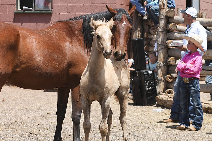 A mare shows off her colt during the 2017 Babbitt Ranches Colt Sale at Spiderweb Camp July 8.