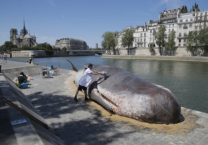 Tim Van Noten a member of a Belgian artists' collective pours water on a real-looking, life-size whale sculpture is displayed along the Seine River in Paris, France, Friday, July 21, 2017. (AP Photo/Michel Euler)