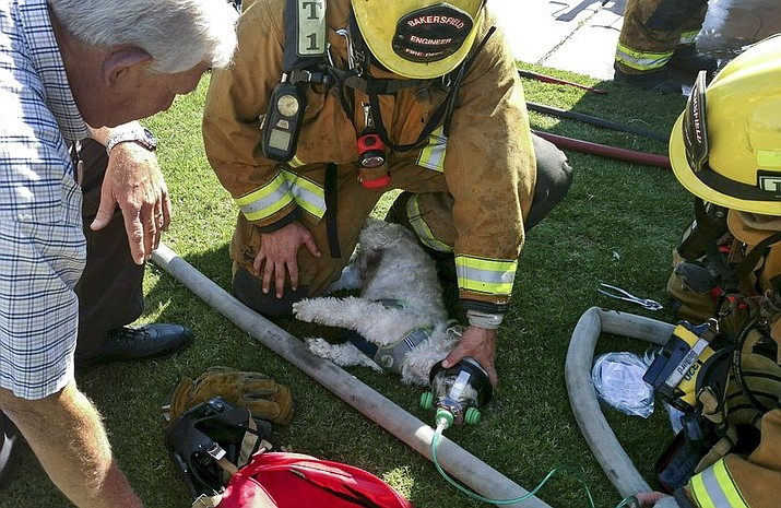 "Firefighters resuscitate a Shih Tzu dog, named ""Jack,"" after pulling him from a burning home Friday, July 21, 2017, in Bakersfield, Calif. Using a pet oxygen mask donated to the department by a local Girl Scout troop, firefighters slowly bring Jack back to life. (John Frando/Bakersfield Fire Department via AP)"