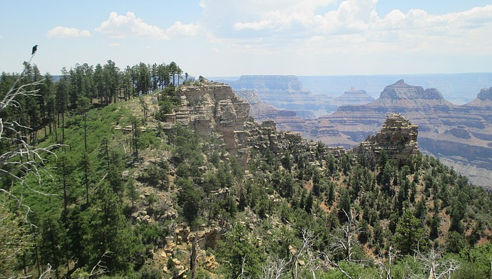 Grand Canyon's Widforss Trail a hiker's paradise on the North Rim