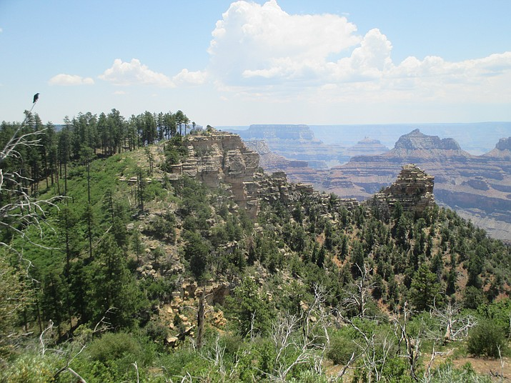 Widforss Traill is located off Highway 67. It offers views of the North Rim and Kaibab National Forest. Stan Bindell/NHO