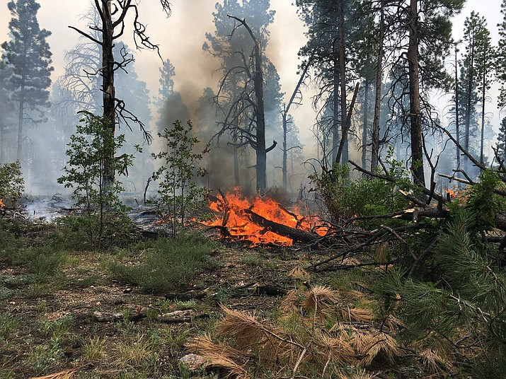 The Pine Hollow Fire on the North Kaibab National Forest was ignited by lightning during monsoon storms July 19. The fire has burned around 500 acres so far.