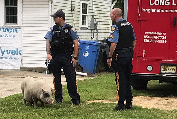 "Three New Jersey area police officers responded to a call about a mischievous pig roaming a neighborhood Saturday morning. The department invited Facebook commenters to post their best ""pig/bacon/cop"" jokes. (Woolwich Township Police Department)"
