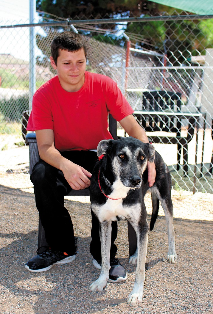 "Lawrence Wilson, kennel technician at the Kingman animal shelter, works with Toni, one of the 10 ""Most Wanted"" dogs up for adoption at a special rate of $10. The shelter is trying to adopt out animals that have been there a while."