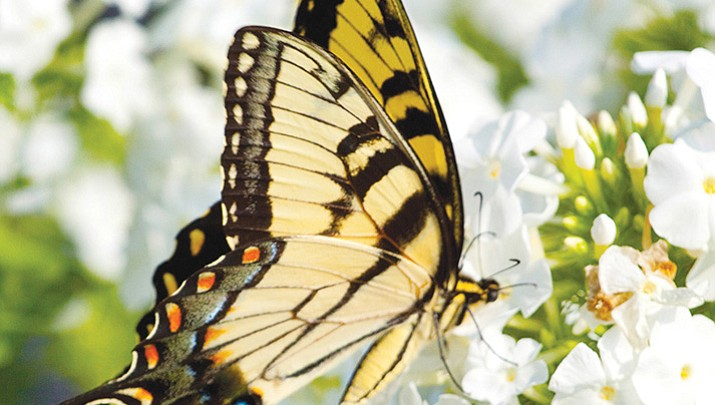 Gardens home  to both helpful, harmful insects