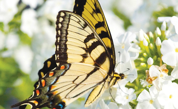Butterflies and other helpful insects, such as bees, pollinate flowers and can keep dangerous pests at bay in the garden. (Metro Creative Graphics Inc.)