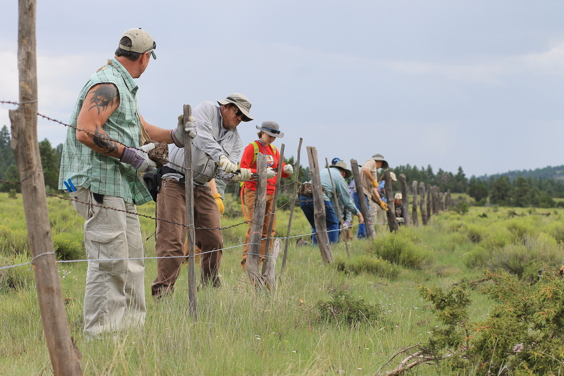 Mending fences: Wildlife managers alter fences for