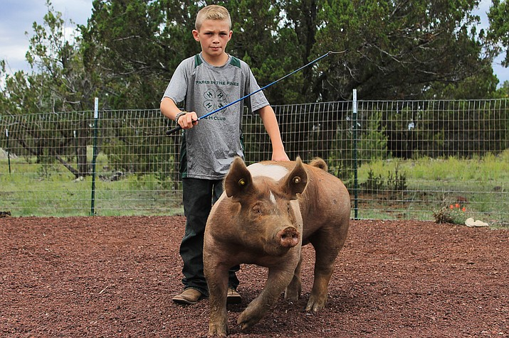 Trevor Hausmann prepares his pig for the Coconino County Fair in 2016. The 2017 fair is Sept. 2-5 at Ft. Tuthill.