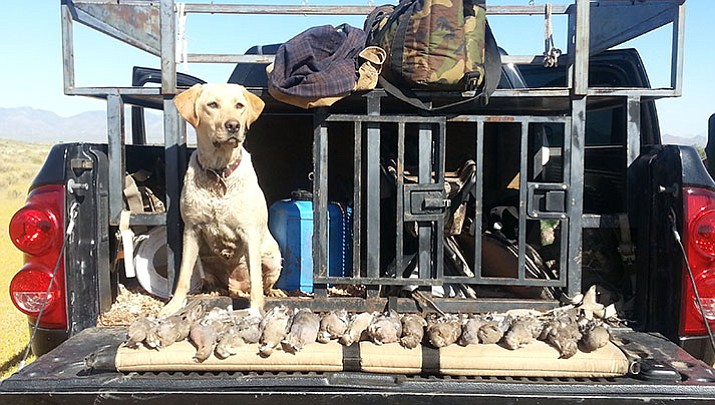 Stella, a yellow Labrador retriever watches over the doves and Lacie Robbins and Tony Campbell bagged on opening day of a hunt.