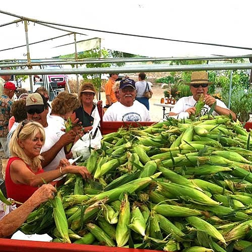 Folks pick out sweet corn. (Mortimer Family Farms/Courtesy)