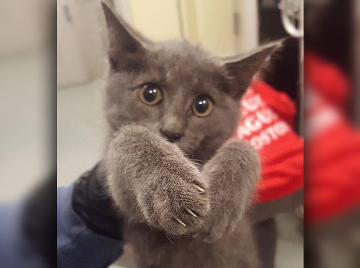 A kitten was spotted walking along the side of the road as cars drive by in the Ted Williams Tunnel in Boston, and was rescued by state police troopers who shut down traffic for it. (Massachusetts State Police via AP)