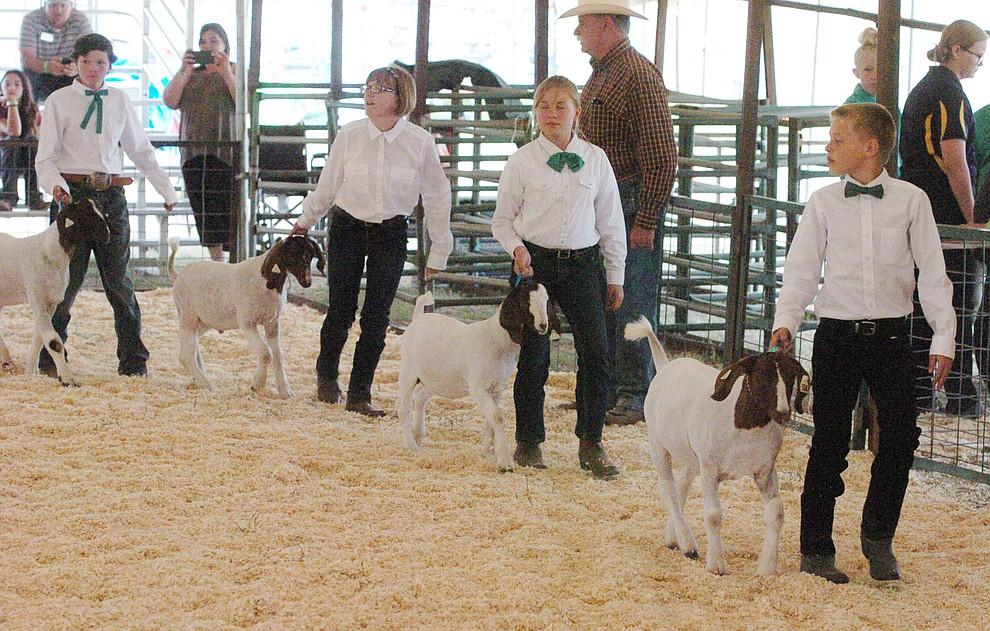 Boer Goat Novice Showmanship at the 2017 Yavapai County Fair at the Prescott Rodeo Grounds Wednesday, September 7 in Prescott . (Les Stukenberg/Courier).