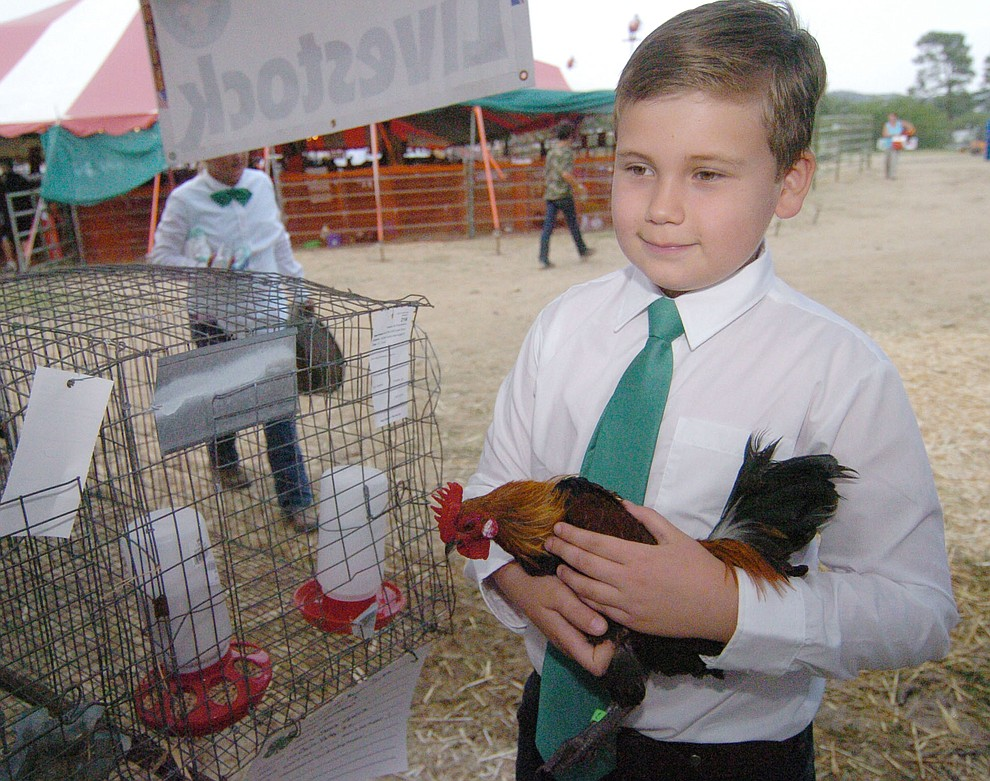 Paulden's Jacob Viguerin gets ready to show his light brown Dutch cock at the 2017 Yavapai County Fair at the Prescott Rodeo Grounds Wednesday, September 7 in Prescott . (Les Stukenberg/Courier).