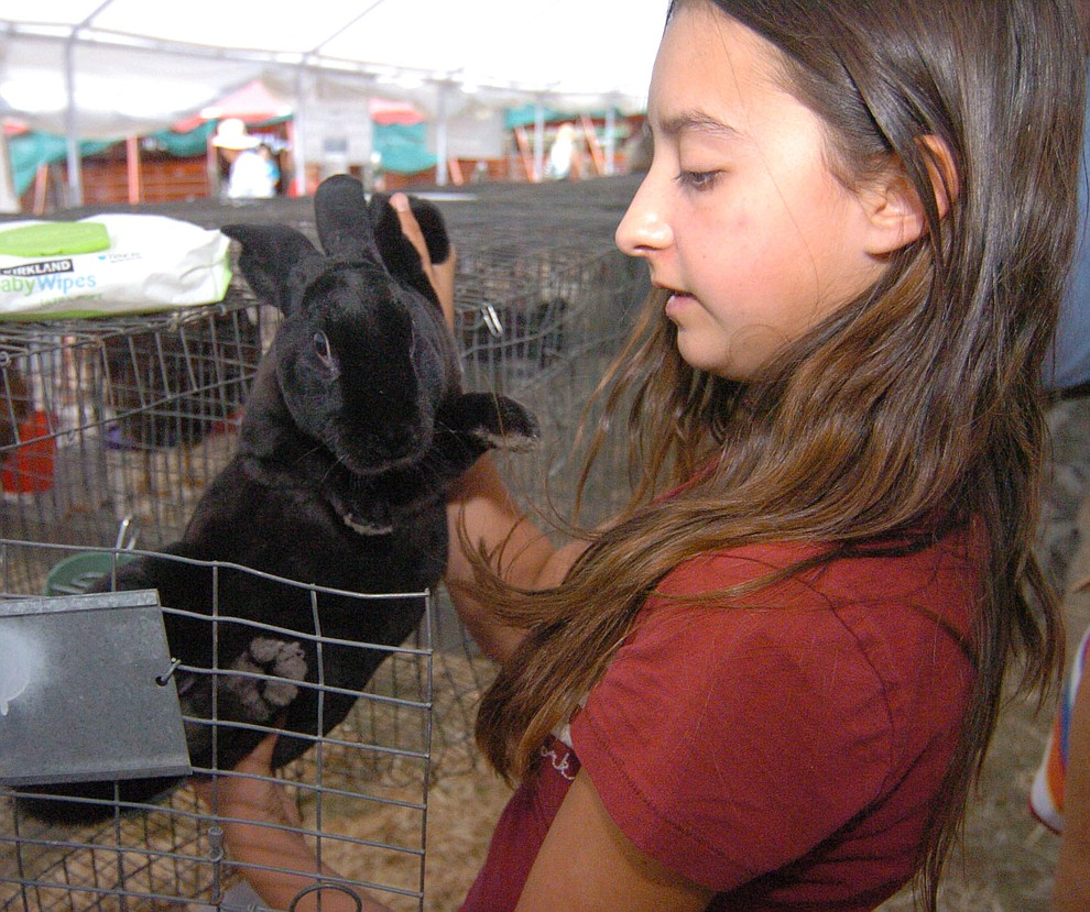 Chino Valley's Selena Cramer with her Rex rabbit at the 2017 Yavapai County Fair at the Prescott Rodeo Grounds Wednesday, September 7 in Prescott . (Les Stukenberg/Courier).