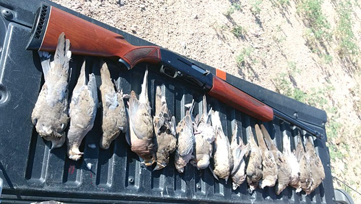Opening day limit! Kingman resident Joe Bartmus took this opening day limit of 15 Mourning doves.
