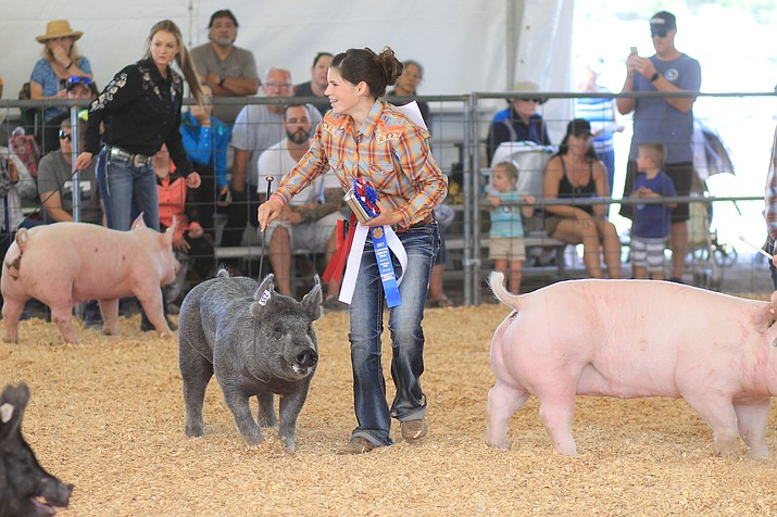 Katherine Westlake receives the Senior Swine Showmanship award at the Coconino County Fair. Youth from northern Arizona 4-H clubs competed for livestock and other awards over the weekend with an auction wrapping up the event Sept. 2.