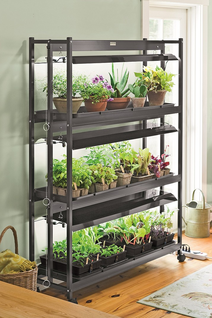 Using a combination of artificial and natural light helps plants better tolerate the less-than-ideal indoor growing environment. (Gardener's Supply Company)