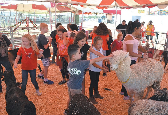 Kids from all over the county make their rounds through the fair's petting zoo.