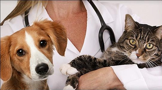 YHS will offer discounted rabies vaccinations for cats and dogs at its Spay/Neuter and Wellness Clinic from 8 to 11 a.m. and 1 to 4 p.m. Friday, Sept. 29. (YHS/Courtesy)
