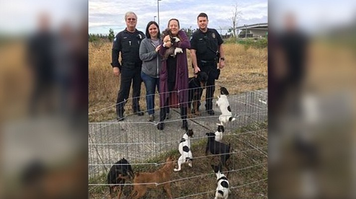 Police in western Washington state say they've recovered a stolen motor home and reunited its owner with about 10 dogs that were inside. (Lacey Police Department)