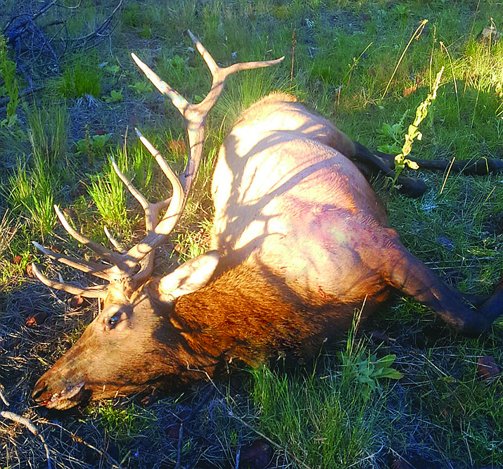 Valle Vista's Ron Stephens took this bull on a recent archery hunt in Game Management Unit 8. (Don Martin/Photo special to the Daily Miner)