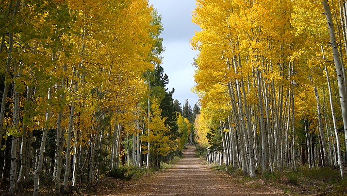 Fall colors are peaking right now in northern Arizona, including the North Kaibab.