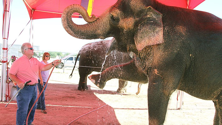 City Council opposes mistreatment of animals, but doesn't ban circuses