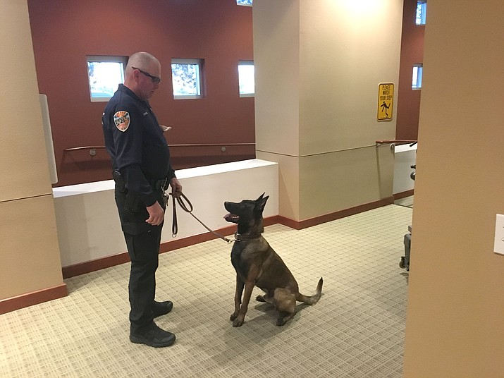 Sevende, the newest dog in the Kingman Police Department's K-9 unit, is handled by Officer Billy Fancher Tuesday during the dog's introduction to City Council members. The dog and handler recently graduated from four weeks of training in Texas.