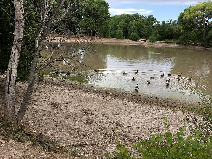 The Camp Verde Town Council spent the majority of its Wednesday regular meeting discussing beginning steps toward the maintenance and staffing of Verde Lakes Pond as a town-owned park.