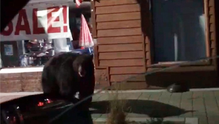 A Placer County Deputy filmed this large bear peering into shop windows in a California tourist community on Lake Tahoe. (Still image taken from video/Placer County Sheriff's Office)