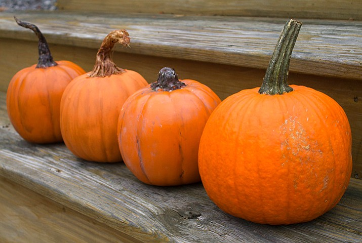 This Oct. 8, 2017, photo in Hopkinton, N.H., shows one real pumpkin, right, along with three fake versions fixed up to look a bit more real. (Holly Ramer/AP)