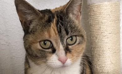 Rosalee (Catty Shack/Courtesy)