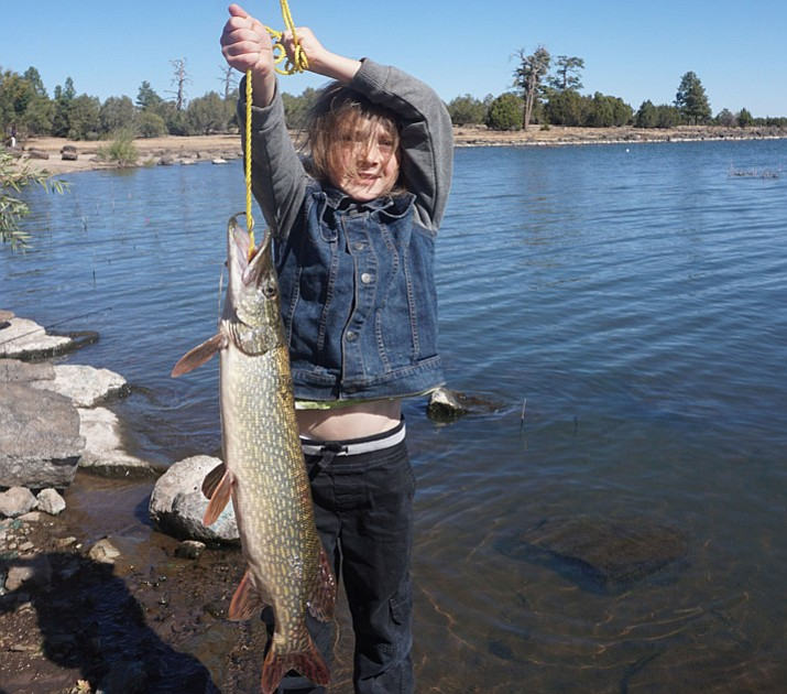 Photo young angler from prescott catches massive fish for Fishing in flagstaff