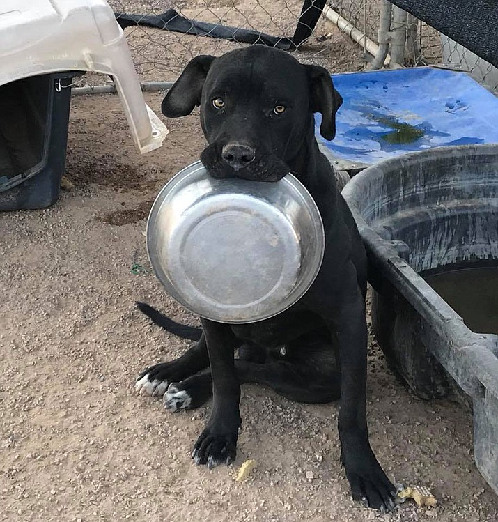 A dog at the Kingman animal shelter lets everyone know her bowl is empty. Western Arizona Humane Society is holding its Muttsquerade fundraiser Nov. 4 at Grand Events Center to benefit the animal shelter.