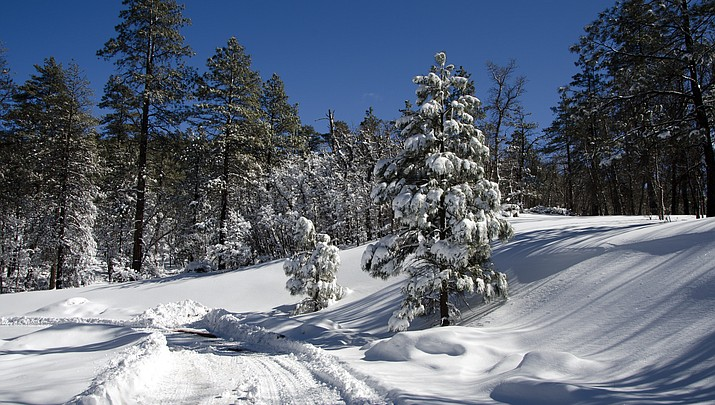 Christmas tree prices climb 25 percent