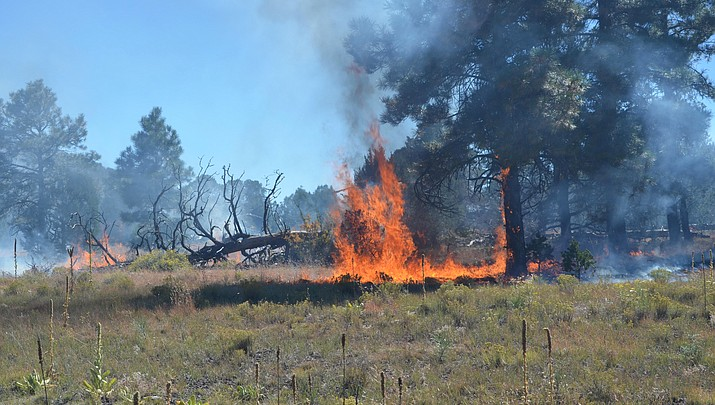 Two prescribed burns for Tusayan  Ranger District to begin this fall