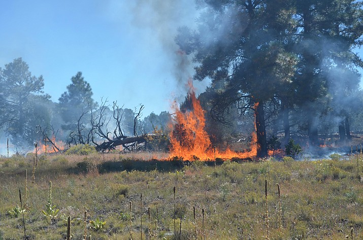 Fire managers on Kaibab National Forest have treated 7,855 acres of forest during scheduled prescribed burns.