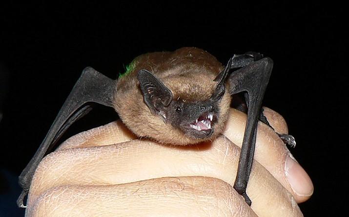 Bats Doing Well In Arizona  Despite Being Battered