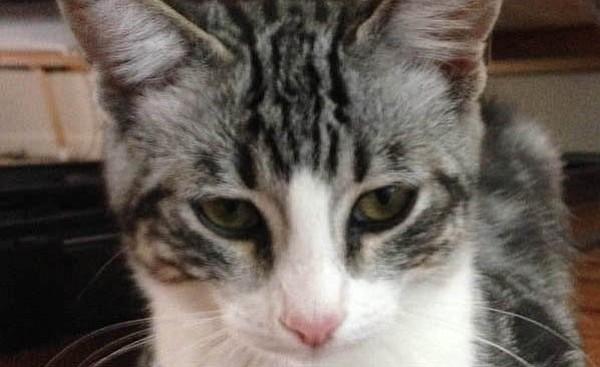 Swirly (Catty Shack)