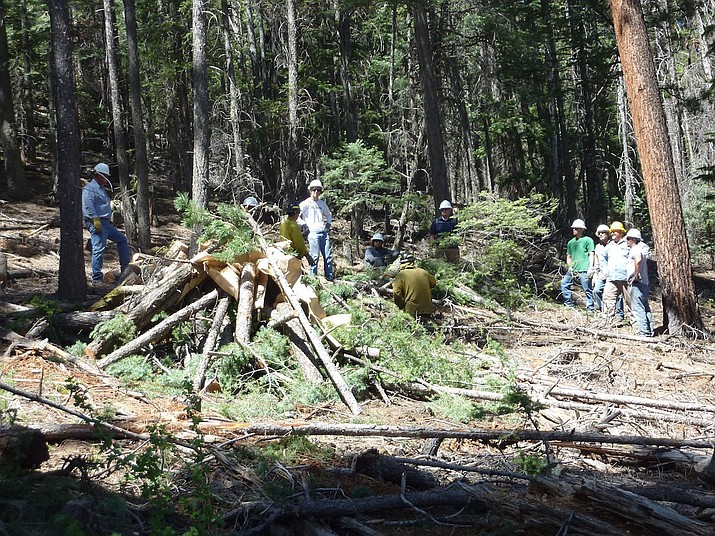 Apache County crews thin the forest near Greer in this 2012 photo, by cutting down small trees and low-hanging limbs. Experts say forest management like this is one key to preventing wildfires – and the goal of a House bill that critics called a 'giveaway' to the logging industry.