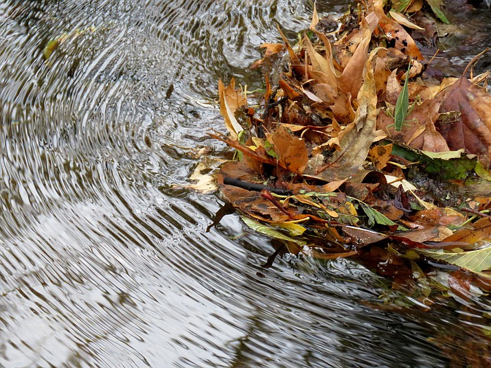 Amassed leaves and ripples in Clear Creek/Melissa Bowersock