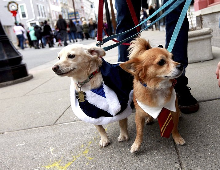 Rescue dogs named Molly Weasley and Arthur Weasley, owned by Diane and Jeff Swope, are dressed as Harry Potter movie characters on Spring Street during a Harry Potter-themed celebration called Diagon Alley in Newton, N.J. (Terry Klimek/The New Jersey Herald via AP)