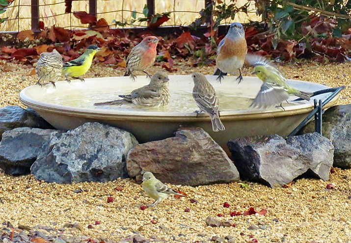 Birds enjoying a bird bath. (Courtesy)