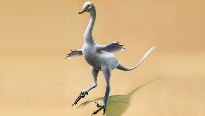 This illustration shows a Halszkaraptor escuilliei dinosaur. The creature, about 18 inches (45 centimeters) tall, had a bill like a duck but teeth like a croc's, a swan-like neck and killer claws. (Lukas Panzarin via AP)